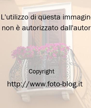 Fiori sul balcone - Filippo Foto Blog