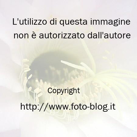 Particolare del fiore di una pianta grassa - Filippo Foto Blog