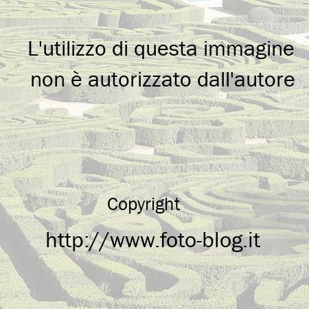 Un Labirinto In Giardino Filippo Foto Blog