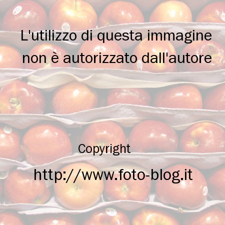 Strati di mele filippo foto blog - Immagini stampabili di mele ...