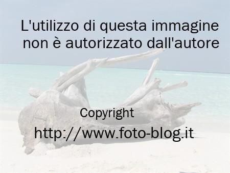 Tronchi in riva al mare - Filippo Foto Blog